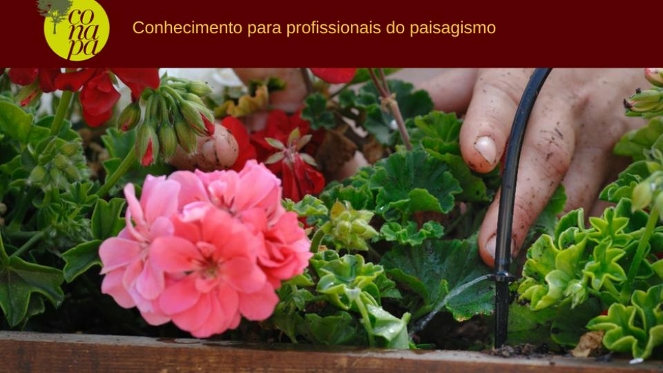 Irrigação para Jardins Verticais e Telhados Verdes