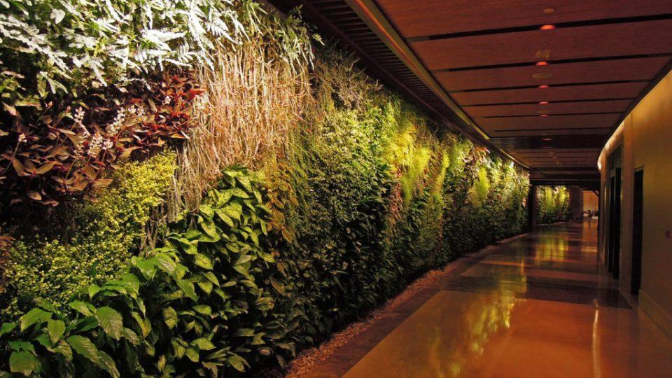 Curso de Jardins Verticais em São Paulo