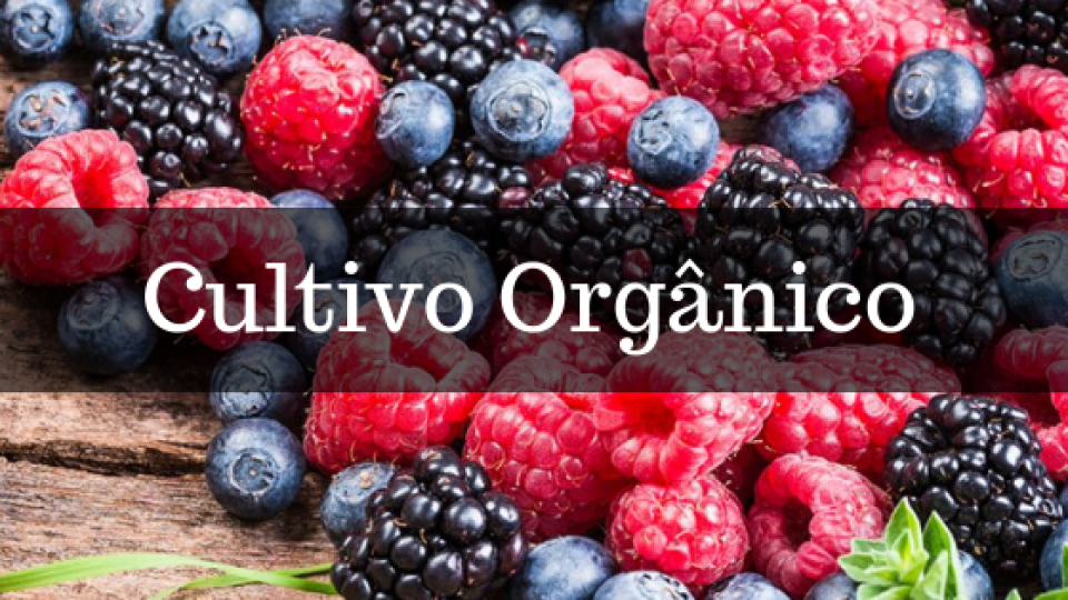 Palestra gratuita aborda o tema: Cultivo de Frutas Vermelhas Orgânicas
