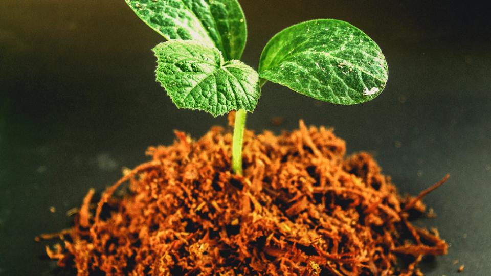 Botânica, curso de Botânica para paisagistas